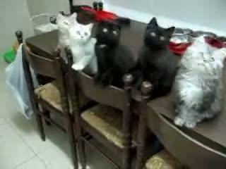 Funny Cat Videos, Cute Pets Cute kittens