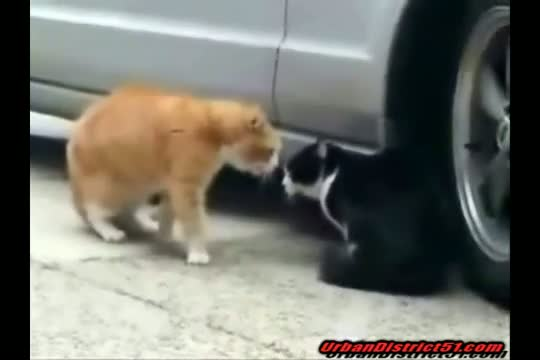 VIDEO OF THE DAY HAHAHAHAH (Kitten Video)