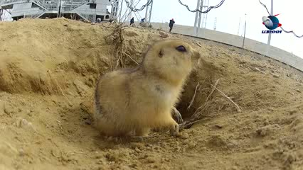Funny video - Gopher Lives Under Space Rocket Launching PadGopher Lives Under Space Rocket Launching Pad