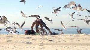 Crazy Bird Prank!! - Hilarious Crazy Seagull Prank