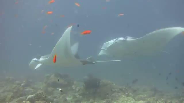 Maldives Underwater Footage