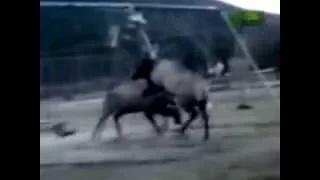 Animals fighting to the death Battle on Playground animals fighting