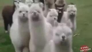 Wild Animals Caught on Camera When Animals Attack Videos Animals Attacking People Compilation