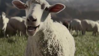 Super Bowl Ads Looking Super Safe
