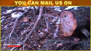Timber Smugglers Loot Green Gold in Baramulla Administration Nowhere To Be Seen On The Ground