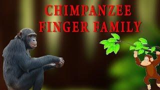 Chimpanzee Finger Family | Animal Finger Family