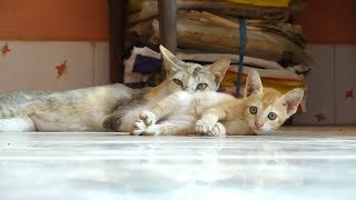 Cute Kitten Playing with Mother Cat | Cute Cat Compilation | Satya Bhanja