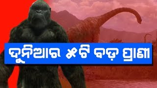 ଦୁନିଆର ସବୁଠାରୁ ୫ଟି ବଡ ପ୍ରାଣୀ II 5 Real Giant Animals That Exist In Real Life