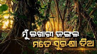 lakhari jungle pkg ...