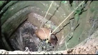 Well done Canaconkars'! #Bull rescued from well by villagers