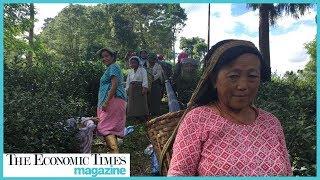 Darjeeling tea ops limp back after Gorkha trouble | ETMagazine