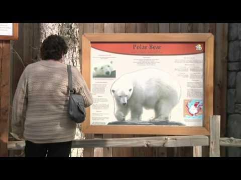Alaska Zoo Plans for Polar Bear Transition Ctr. News Video