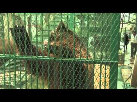 Raw- Animals Rescued From Private Mexican Zoo News Video