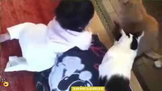 Baby CAt & Dog - Funny videos that will make you laugh so hard you cry