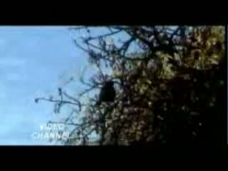 Churao Na Dil Video Song