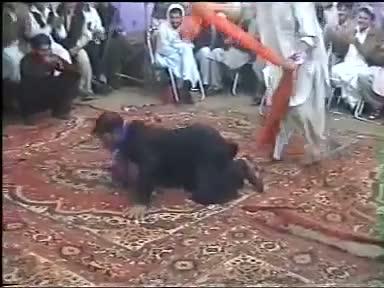 Funny - Crazy Cock ya Crazy Khan!