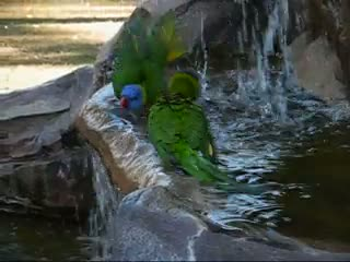 Lovely Birds of Lone Pine Koala Sanctuary