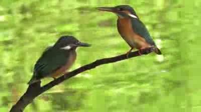 Lovely birds in Tokyo