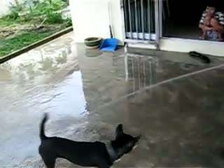 Funny Water Dog  Video