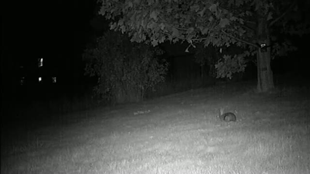 Bunny Sees Ghost Caught On Tape!