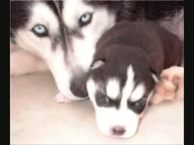 World Dangerous, Dog for Dog Loverrs