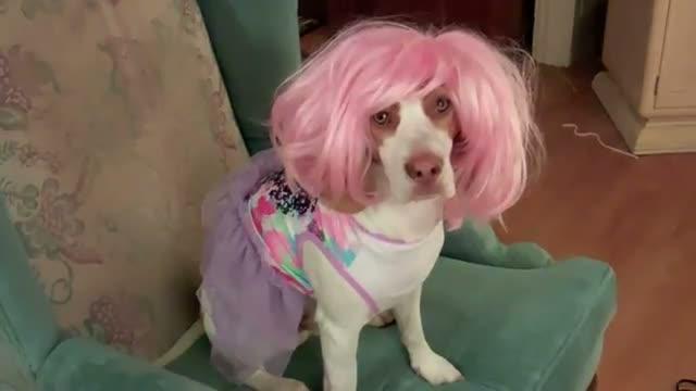 Drag Dog Loves Pink Wig