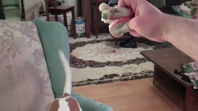Dog vs. Puppet