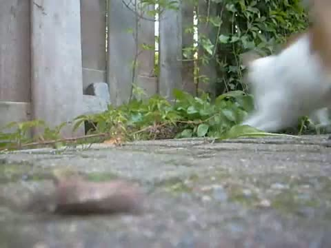 2 fighting cats! must watch! Cat also scratched my cam!