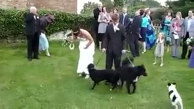 Don't bring Dog in Wedding , Hahaha , Must watch..