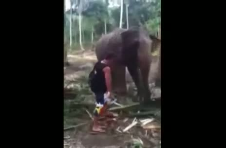 Elephant hits man with trunk