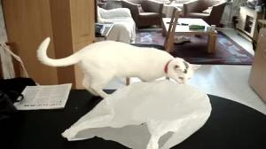 Why cats shouldn't play with plastic bags
