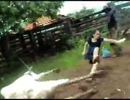 Never mess with a ninja cow