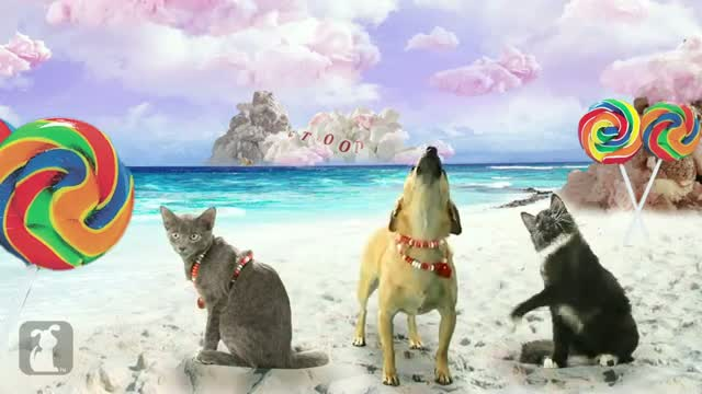 Katy Perry - California Gurls (ft Snoop Dog) - Katy Puppy - California Grrrs - Wide Awoof - Petody