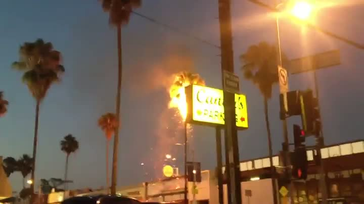 Bottle Rocket Causes Palm Tree Fire