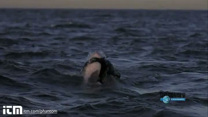 Slow Motion Shark Attack HD