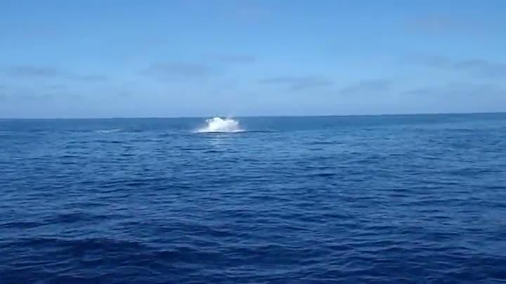 Flying Mako Shark Does 9 Somersaults