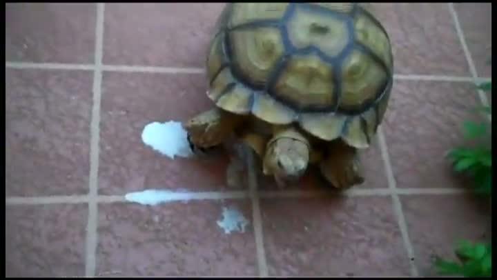 Turtlegasm
