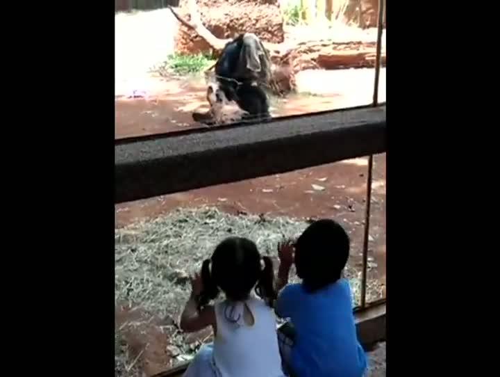 Chimp Surprise