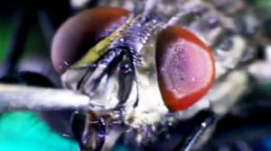 Fly Eats Sugar
