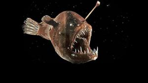 Bizarre Facts About Angler Fish