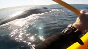 Kayaker Encounters Blue Whale