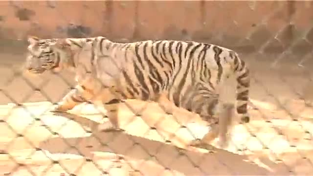 Jaipur Zoo wraps its inmates in warmth