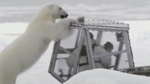 Close Encouter With a Polar Bear