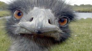 Mountain Biker's Encounter With Emu