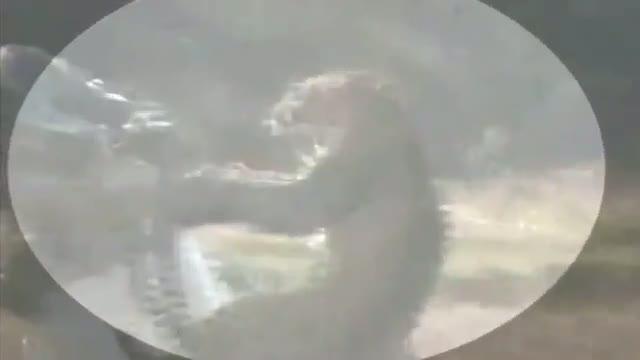 Fourteen injured in leopard attack in Jalpaiguri