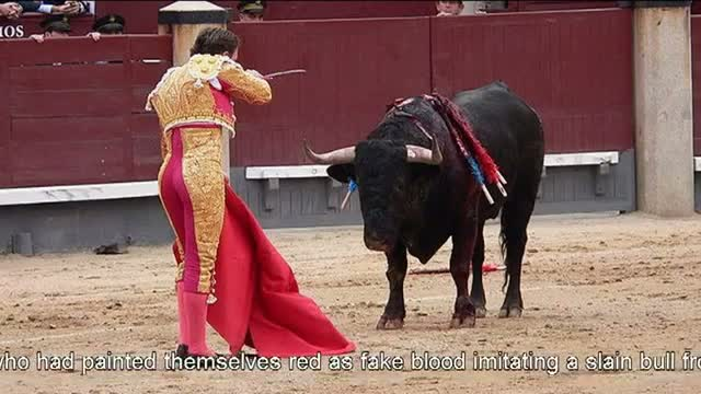 Animal rights activists protest bullfighting in Mexico