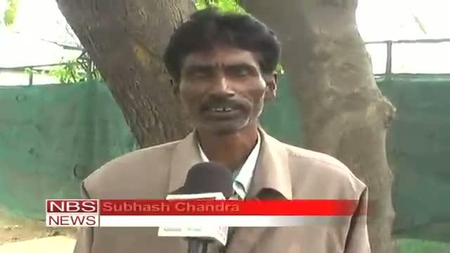 Rudraksha finds habitat at Rohilkhand