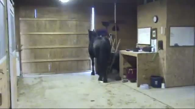 'Houdini Horse' Gets Attention for Escape Antics