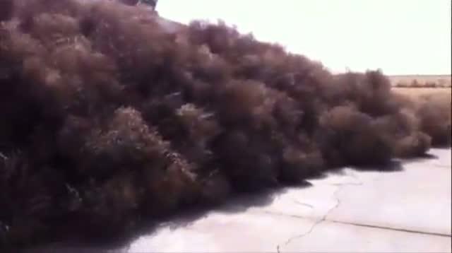 Tumbleweeds Invade West Texas Home