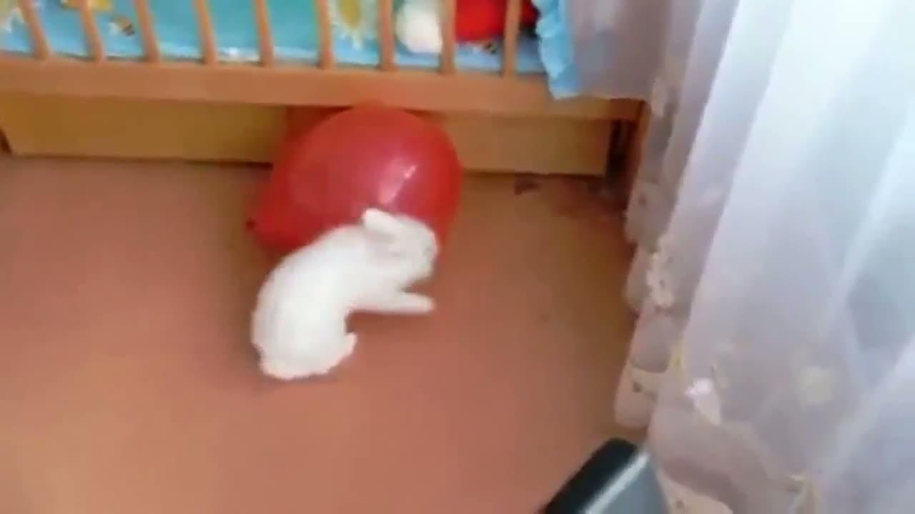 A Rabbit And His Balloon